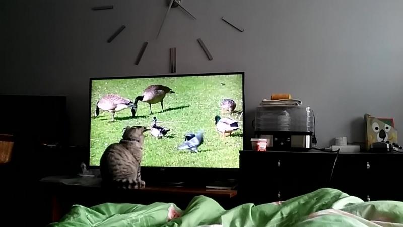 Степа смотрит кино