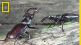 Peek Inside the Strange, Secret World of Bugs Short Film Showcase