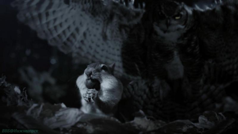 BBC «Сокрытые миры (2). Таинственные леса» (Документальный, природа, животные, 2014)