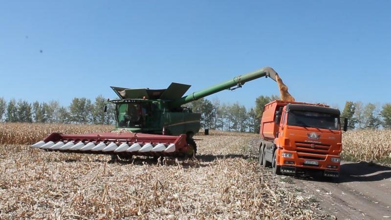 Хороший урожай кукурузы вырастили в 2017 году аграрии из ВКО