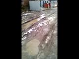 вот через такую грязь нужно пройти жильцам нескольких домов на красном,чтоб выбросить мусор