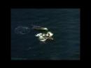 BBC Тайны морских глубин Эти загадочные киты Документальный природа животные 1999