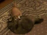 Битва... Меховые дураки :) (Коты. Мои.)