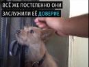 История бедной собачки