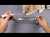 10 Идей Для Владельцев Кошек 10 Pomysłów Dla Właścicieli Kotów