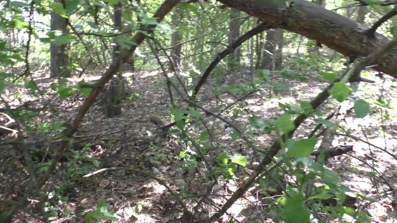 Сморгонь. Лес-8 (Дискордия). Первая траншея по сев. краю леса . Часть 5