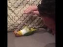 Надо ж так любить попугайчиков