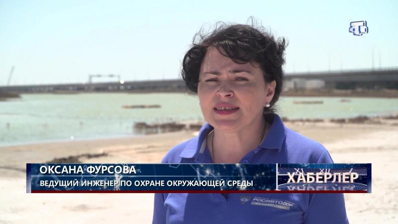 В Черном море восстанавливают популяцию уникальных осетровых рыб