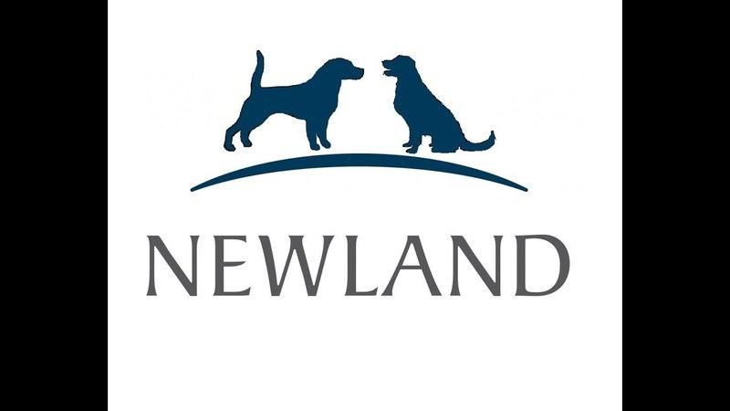 Собаки на площадке и new land 14.01.18