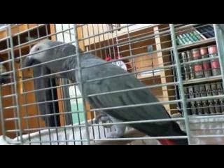 Попугай читает абзацы из Корана!