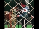 @angelina_surina - Аскольд Запашный @askoldzap ! Невероятно обаятельный мужчина и крутой дрессировщик тигров!