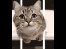 котик очень реалистично выпрыгивает из экрана