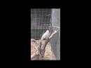 Попугай говорит Лети со мной