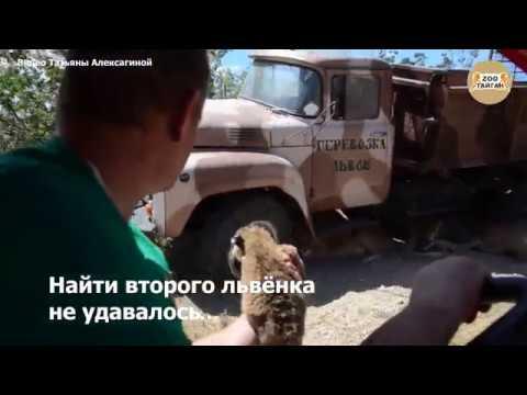 Спасение львят в Тайгане! Тайган. Крым. Salvation of the lion. Taigan. Crimea