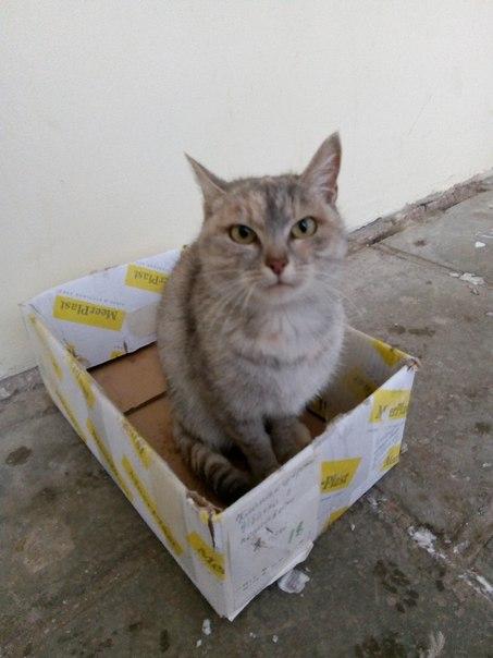Добрый день.  В районе Шереметьевского проспекта найдена кошка (или ко