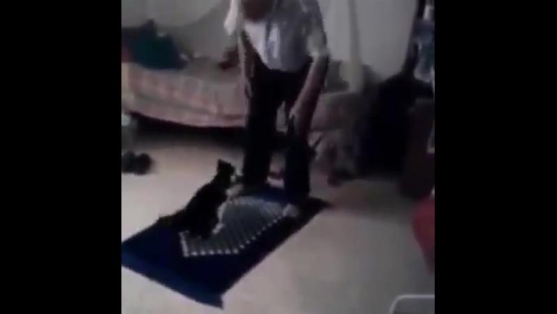 К вопросу о привязывании кота в иных традициях