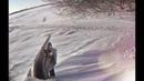 Охота на зайца троплением зимой! Все секреты охоты по первому снегу!