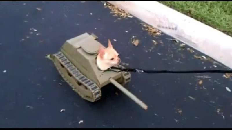 собака танк