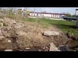 Рощица по ул. Свирской параллельно дому № 33б (06.05.18)