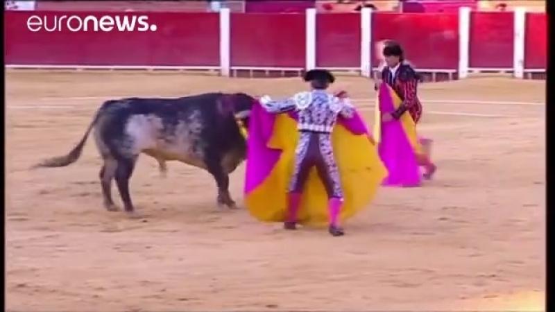 Испания бык убил матадора впервые за 30 лет