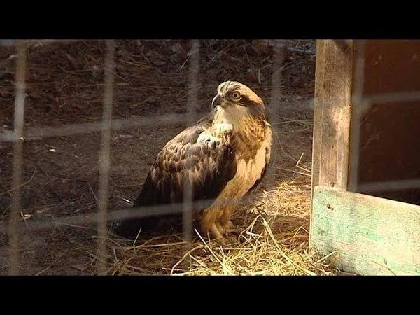 «Птица года» поселилась в окрестностях Ханты-Мансийска
