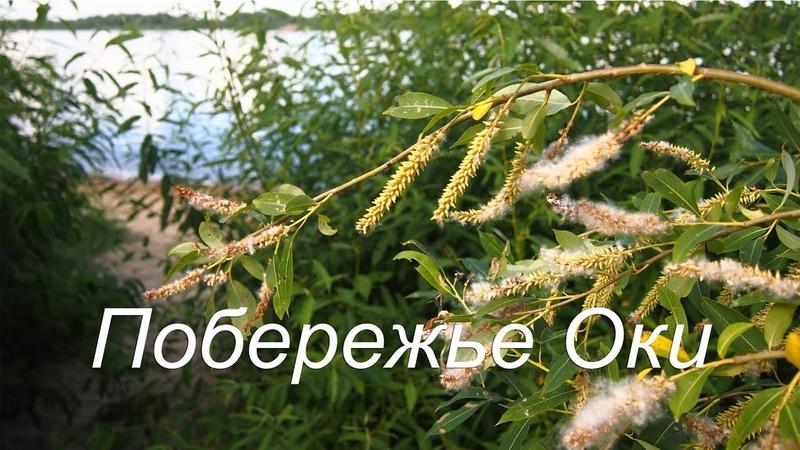 Муром. Побережье Оки, теплоход БОРОДИНО - июль 2018 / Murom. Oka coast, motor ship Borodino