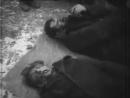 Зверства немецко фашистских захватчиков Хроники 2
