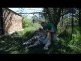 Такое НИГДЕ больше не увидишь ! Человек и тигрица. Тайган .Крым