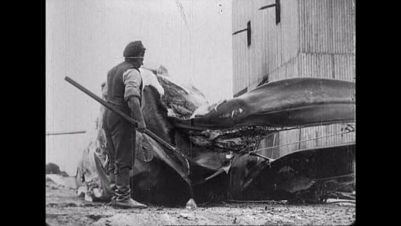 62 Whaling afloat and ashore (Robert W.Paul, 1908)