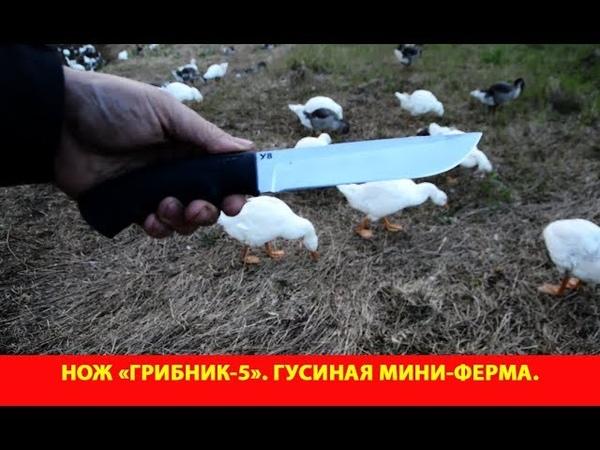 Обзор ножа Грибник-5. Гусиная мини-ферма.