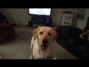 Идеальная собака для жизни