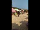 коррида на пляже ГОА