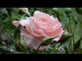 Mon Amie La Rose - Paul Mauriat