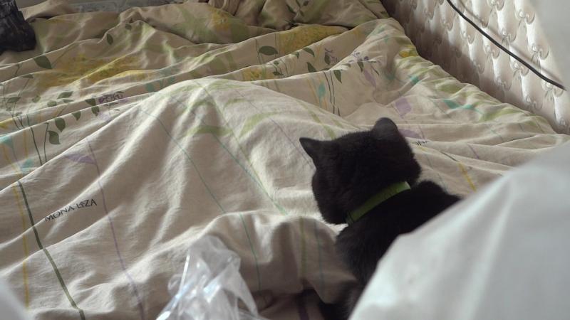 Банши отлавливает Джему под одеялом.