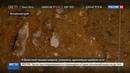 Новости на Россия 24 • До сих пор острая: на Алтае нашли швейную иглу, которой более 50 тысяч лет