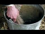 BBC «Викторианская ферма» (4 серия) (Познавательный, история, исследования, 2008)