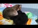 когда твой кот не жирный кастрат а нежная мамулька
