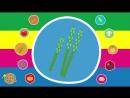 Learn Vegetable Names - Video Flash Cards - Kindergarten, Preschool, ESL for Kids - Fun Kids English