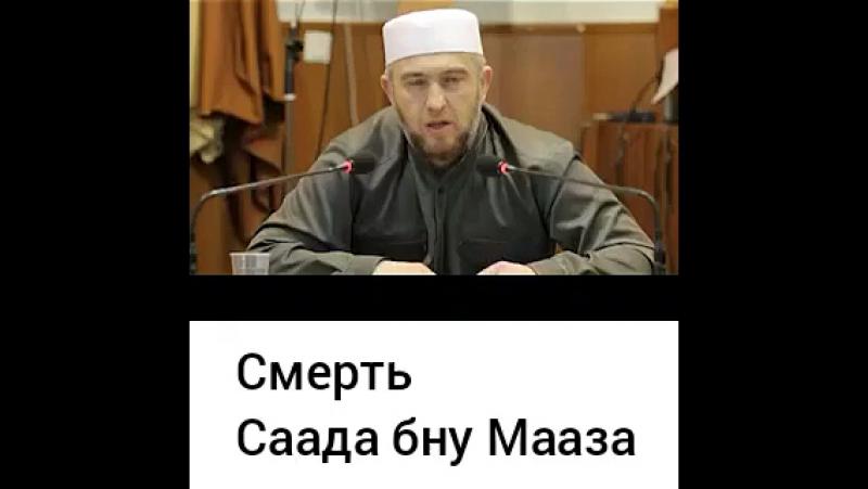 СААД БНУ МААЗ