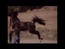 танцует лошади