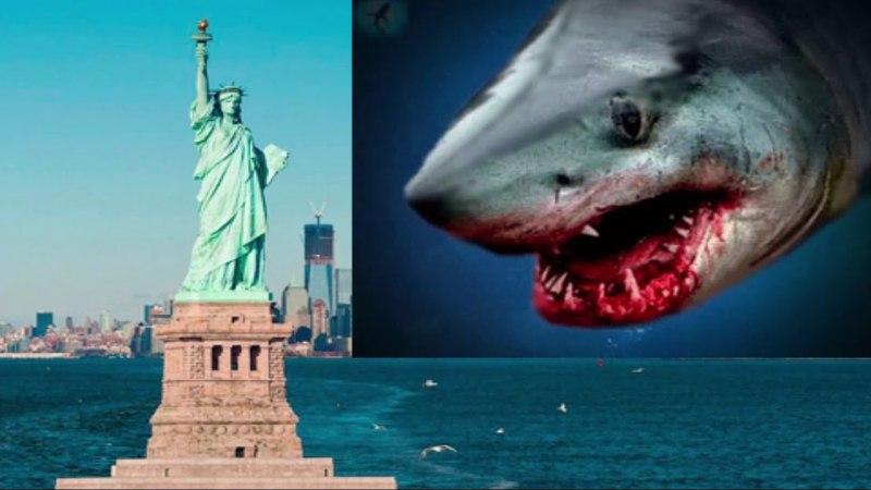Возле Нью Йорка собрались акулы. Они чуют еду?