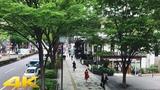 Tokyo Harajuku Omotesando walk