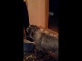Темка) Собакин - угадайкин))