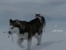 Клип про любовь и преданность собак Из фильма Белый плен 1