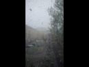 майский снежок