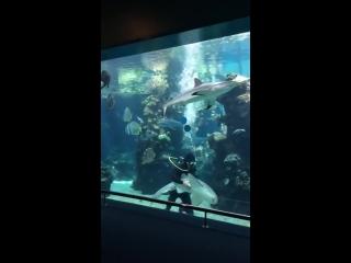 Акула-Зебра не дает этому дайверу работать