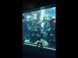 Зебровая акула тоже любит ласку