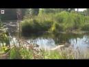 Исследование болота 4 Джунгли травы мокро страшно озеро yklip scscscrp