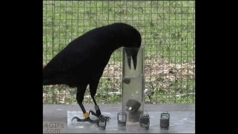 Физматовская ворона