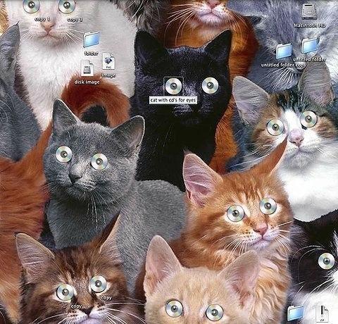 Cat obsession psychology